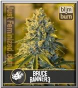 Blim Burn Grow Report for Bruce Banner #3 Cannabis Strain is Good